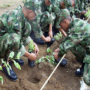 army-planting-trees
